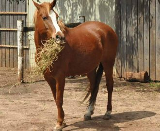 nourrir chevaux poney compleamnt