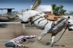 chevaux-anti-stress