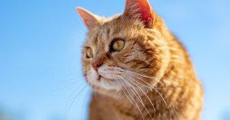 huile de paraffine chat