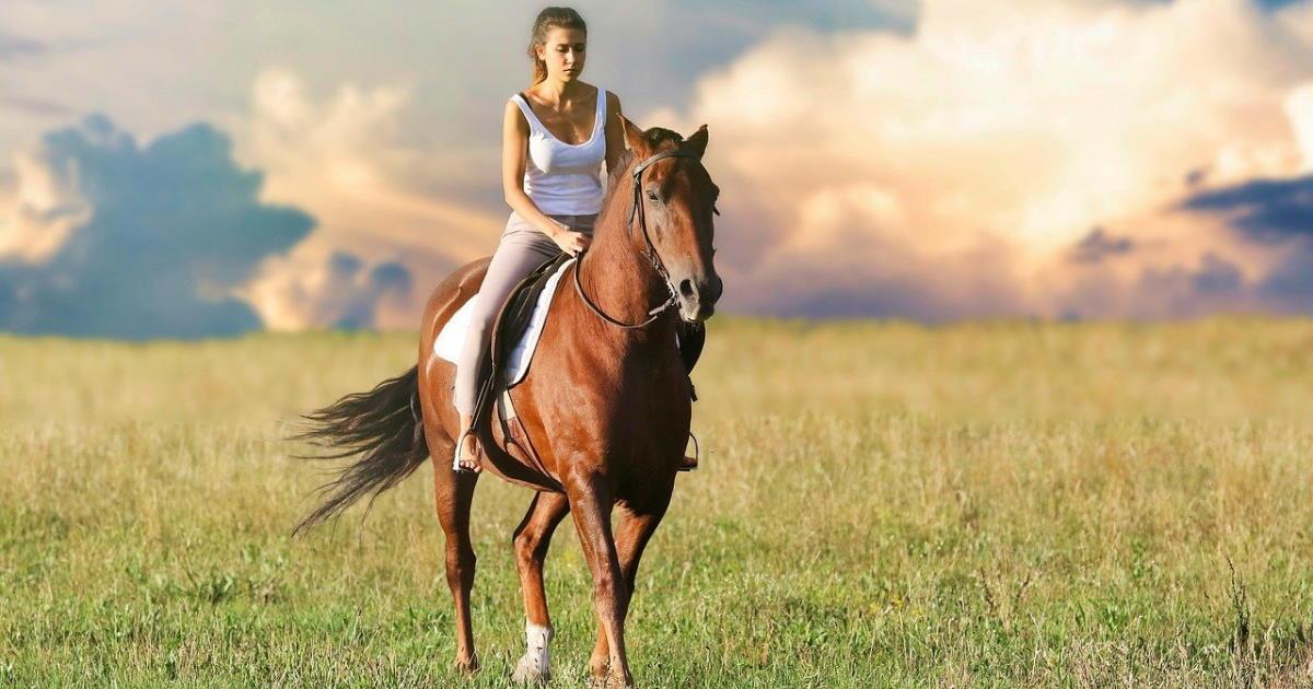 combien coûte un cheval