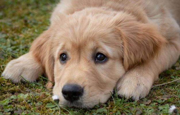 trouble métabolisme chien